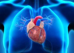 What Adults Need to Know about Coronary Heart Disease (CHD)